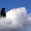 Cloud computing is a risky business.