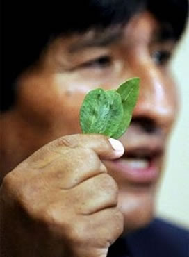 "President of Bolivia Evo Morales defends what he believes is ""the right"" of bolivians to chew coca leafs, in spite of the United Nations recommendations."